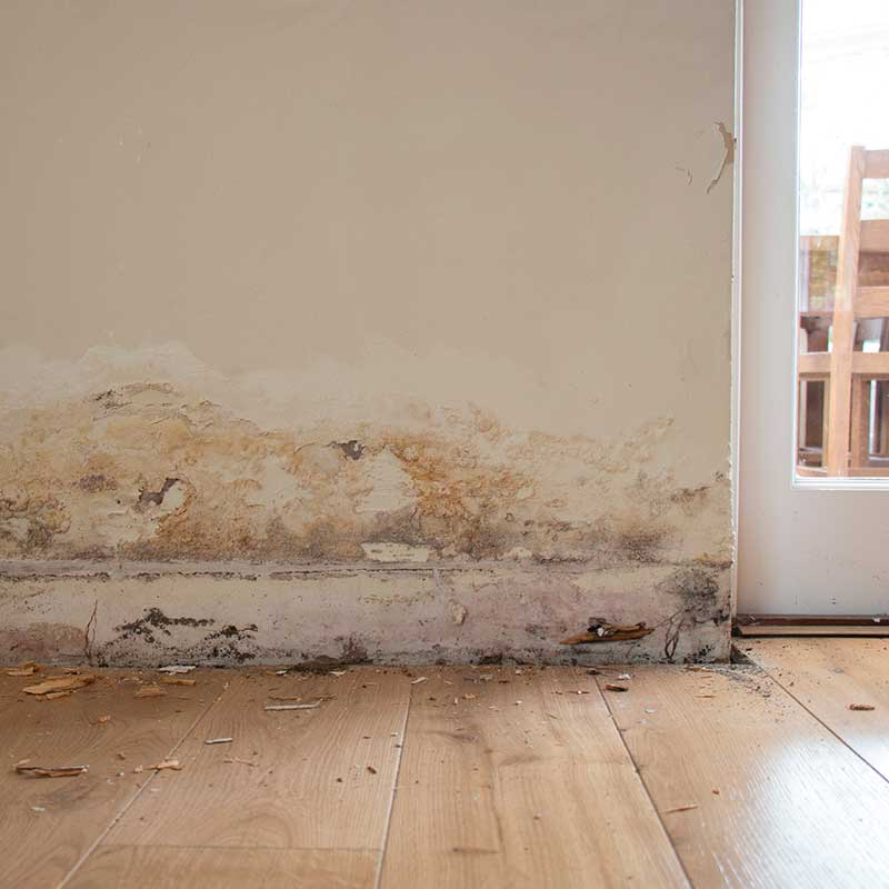 rising damp treatment and prevention